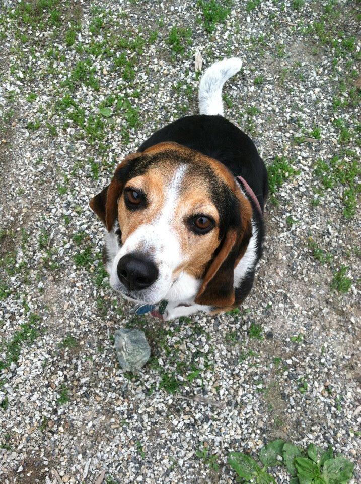 Pet Friendly Valley Street Dog Park